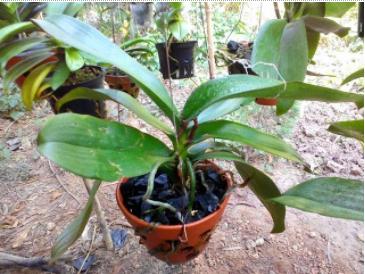 chậu đất nung trồng cây